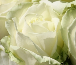 Soft Flowers_2